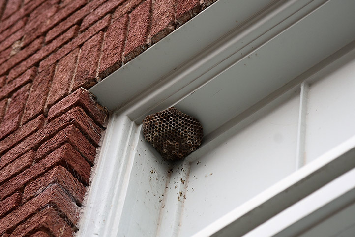 We provide a wasp nest removal service for domestic and commercial properties in Alsager.